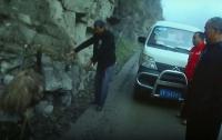 В Китае задержали страуса за нарушение правил ПДД