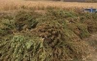 В Запорожской области у хозяина плантации конопли изъяли оружие