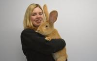 Хозяева выселили из дома гигантского кролика