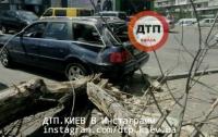В Киеве дерево рухнуло на машину с 12-летней девочкой внутри