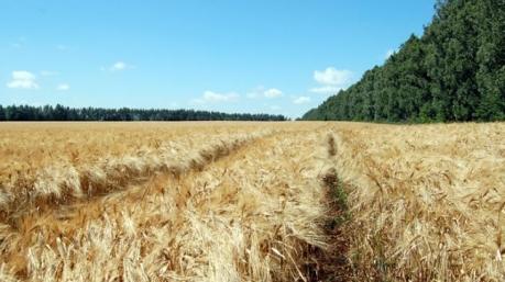 Саудовская Аравия хочет вложить $10 миллиардов в сельхозотрасль Украины