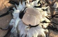 Необыкновенное морское чудище не смог описать ни один биолог