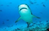 Дайвер ввел тигровую акулу в транс