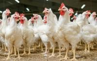 В Украине взлетают цены на курицу