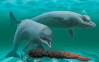 Ученые обнаружили древнего беззубого дельфина