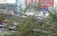 Непогода в Украине: дерево убило женщину