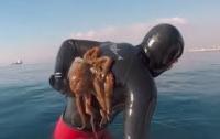 Дайвер несколько минут сражался с осьминогом (видео)