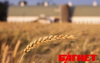 В Украине собрали первые 6 миллионов тонн зерна