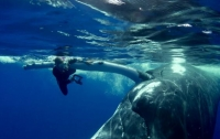 Горбатый кит защитил женщину от акулы