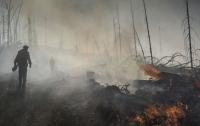 Более 100 человек пострадали в результате лесных пожаров в Калифорнии