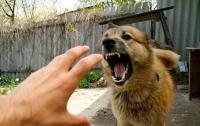 Под Харьковом бешеная собака искусала людей