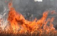 Под Житомиром пожилые супруги сжигали траву и сгорели заживо