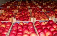 Ученые определили родину яблок