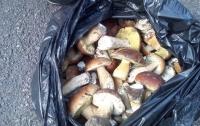 Мужчины пытались вынести из зоны ЧАЭС 40 кг радиационных грибов