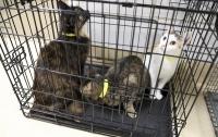 В Беларуси у пенсионерки изъяли 76 больных котов