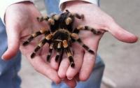 Австралийца собирались арестовать за убийство паука