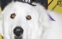 Мэром американского города Корморант стала собака