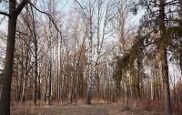 Охотник в глубине леса на Одесщине нашёл тела женщины и двух её детей