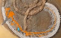 Палеонтологи нашли вымершую змею, проглотившую ящера с насекомым внутри