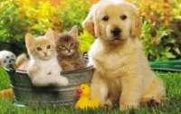 В сети обсудили новый закон о животных
