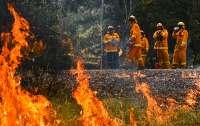 Сильные ливни и паводки начались в Австралии после череды пожаров