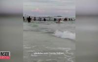 Во Флориде тонувшую семью спасли живой цепью из 80 человек (видео)