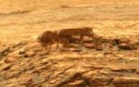 Уфологи заметили на Марсе черного гуманоида