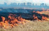 Донбасс в огне: уничтожены урожай и техника