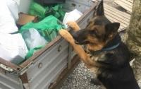 Пограничный пес нашел у пенсионера пистолет