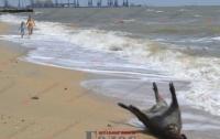 На берегу моря отдыхающие наблюдали жуткую картину