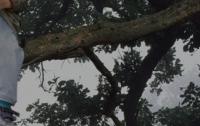 В Киеве семилетний мальчик застрял на дереве