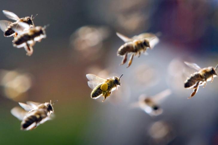 «Всем лежать!». Рой «неправильных» пчел атаковал бейсболистов прямо впроцессе матча