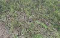 Смерч повредил много километров леса (видео)