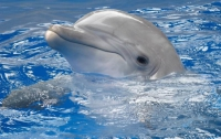 Дельфина-инвалида приютили кашалоты