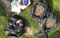 На Волыни СБУ изъяла у контрабандистов янтаря на сотни тысяч гривен