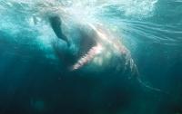 Акула напала на двух женщин у побережья Австралии
