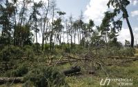 Киевсовет вдвое увеличил штраф за самовольное уничтожение деревьев