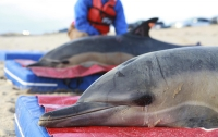 В Австралии более 90 дельфинов выбросились на берег