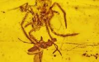 Ученые нашли убийцу, который пролежал в янтаре 100 миллионов лет