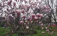 В Ужгород пришла настоящая весна