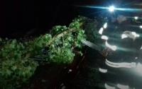 На Закарпатье деревья разбили авто: обесточены 30 населенных пунктов