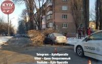В Киеве дерево раздавило два автомобиля