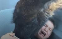 Наглая лама отобрала еду у мальчика, реакция ребенка оказалась бурной (видео)