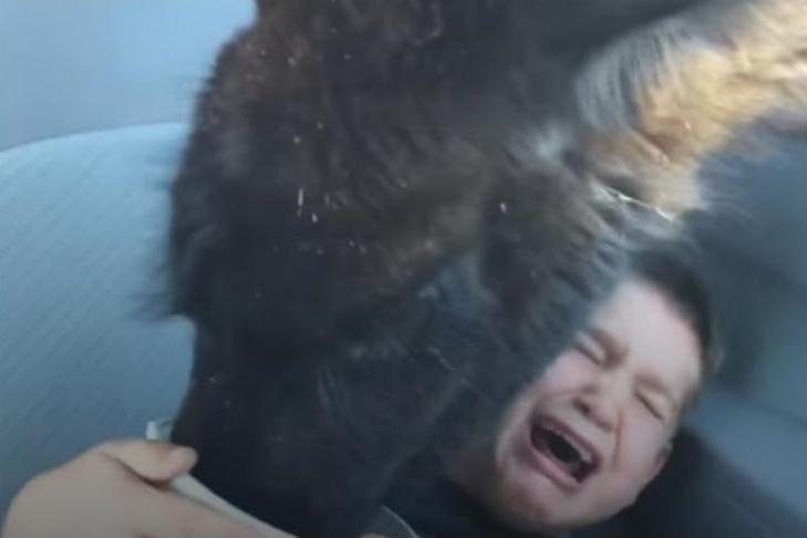 Лама украла у ребенка еду исделала его знаменитым: забавное видео