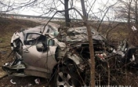 Авто влетело в дерево (видео)