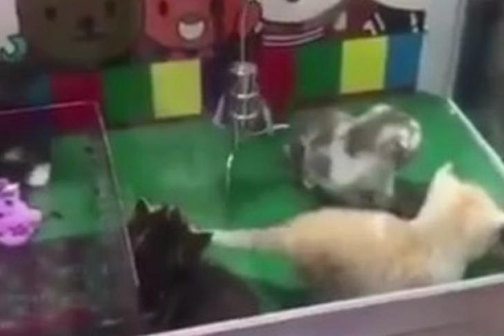 Игровые автоматы котята игровые автоматы вагонетки