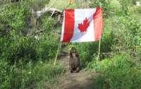 Бобриха украла флаг Канады