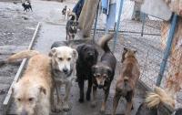 На Херсонщине бездомные собаки напали на ребенка