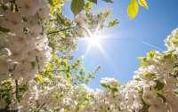 Больше солнца – меньше опасность заражения. Но в выходные и понедельник солнца будет немного