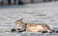 Во Львове решили посчитать котов